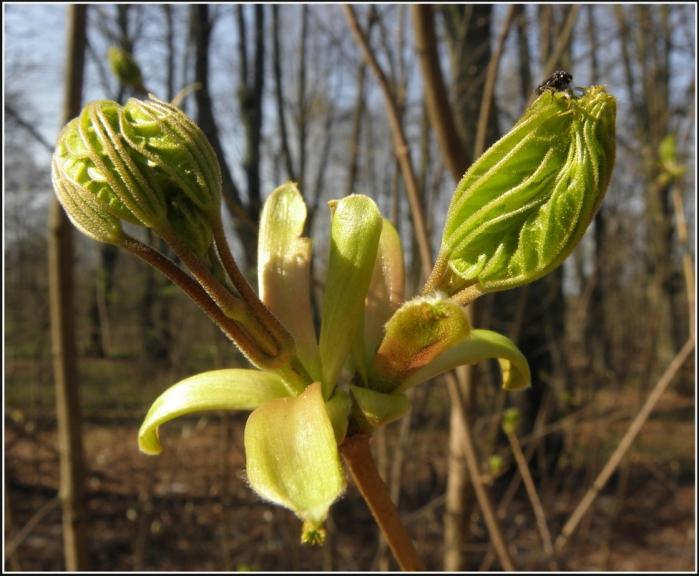 Autors: gubumākonis. Pavasara krikumi.