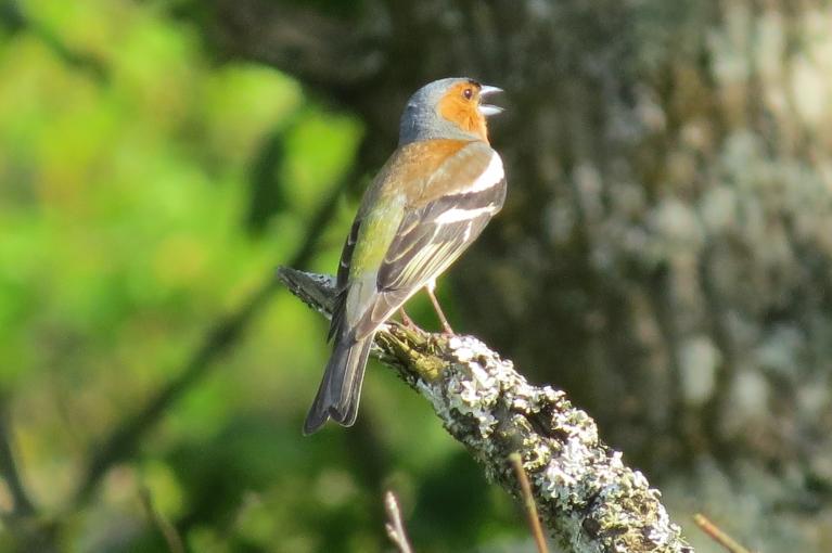 Dziedošs putniņš Lielās Juglas krastā, kurš to spēj no mugurpuses atpazīt, laipni lūdzu nokomentēt.