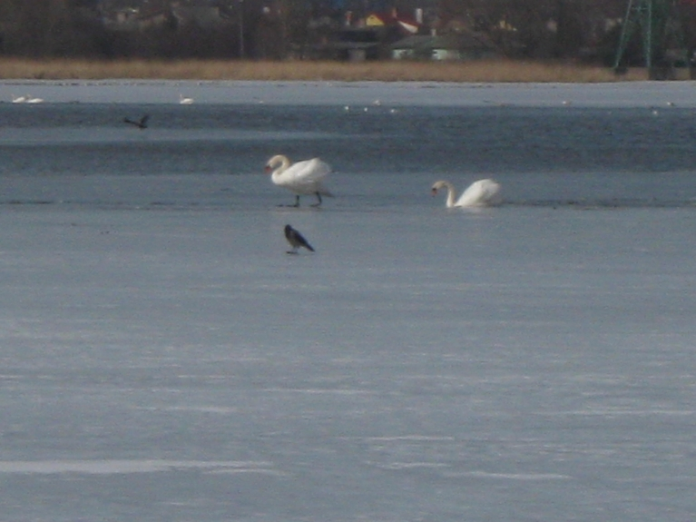 Liepājas Ezers, 28.marts, pamatīga ledus sega vēl bija saglabājusies!!