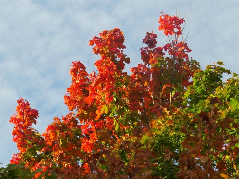 23. septembris- rudens ekvinokcijas diena.
