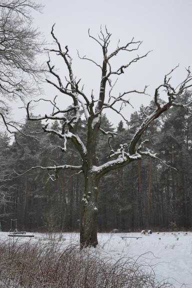 Šampētera mežā valda klusums un miers...