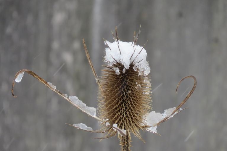 Autors: Migla. 15. marta pēcpusdienas sniegputenis. Katram laikam -savs skaistums.
