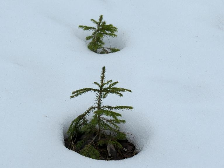 Mežā gan sniega vēl pietiekoši.