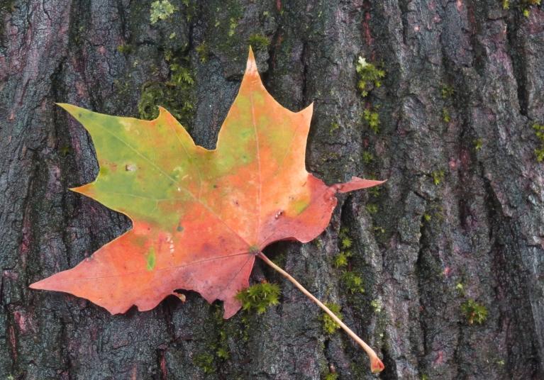 Kaut gan dienas vidus vēl atgādina vasaru, vēsās naktis un krāsoties sākušās koku lapas mūs atgriež īstenībā.