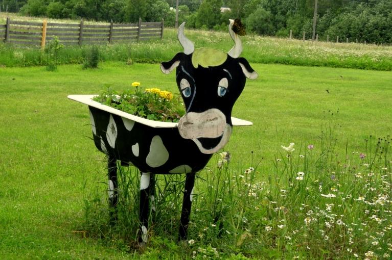 """Lūk ideja dārza interjera priekšmetam- bija vanna, kļuva par """"gotiņu"""" :)."""