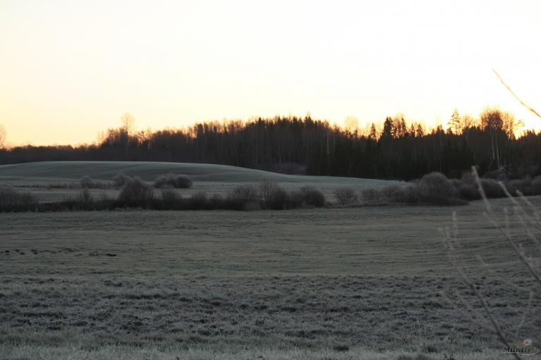 Pļavas baltas.