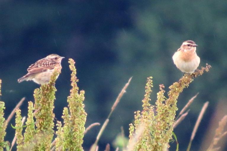 Mazie putniņi tādi sabozušies, lietus laikā mušas un kukainīši noslēpušies zem lapām...