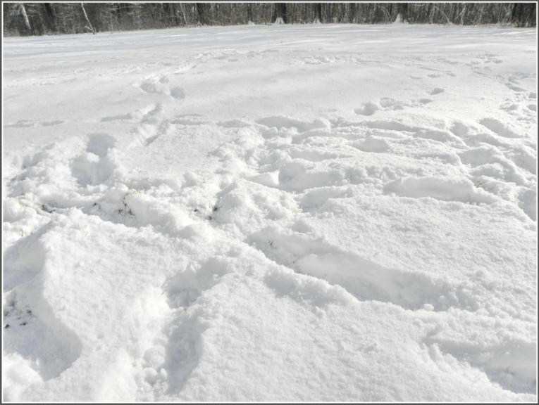 Autors: gubumākonis. Diena, kad atgriežas Ziema (16.03.)