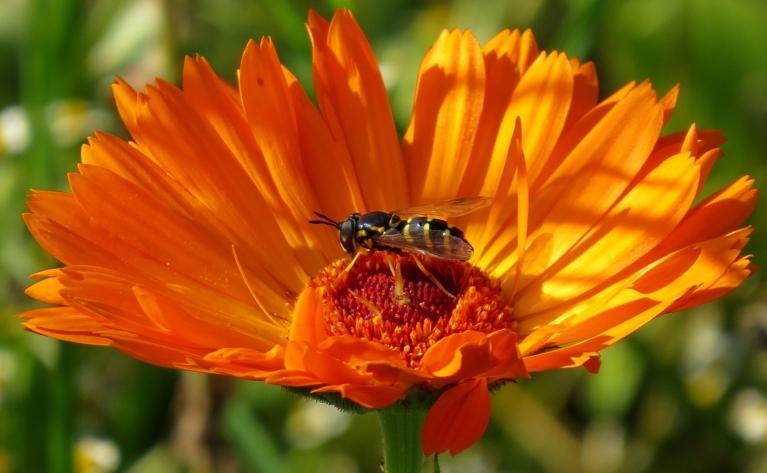 Dienas vidu vēl liela rosība- tauriņu un citu lidojošu kukaiņu netrūkst.