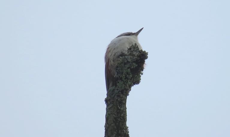 Putnu dziesmas gan kļuvušas pavasarīgākas...