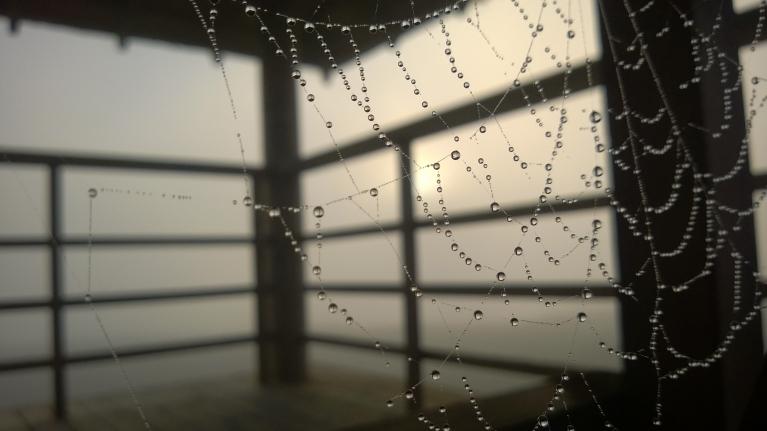 Zirnekļa tīklos sapinusies rīta rasa