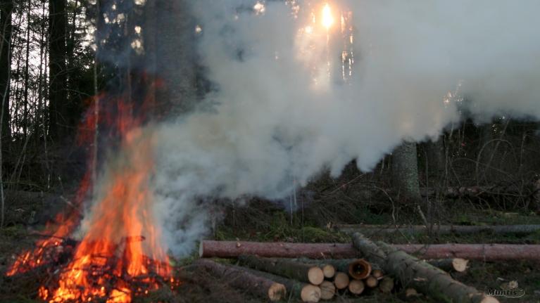 Mežā zari arī labi deg.