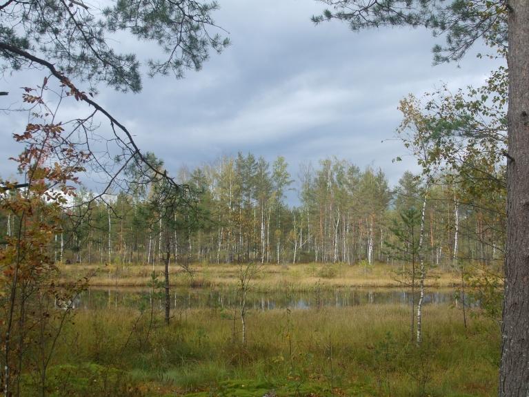 Mazs ezeriņš meža vidū...