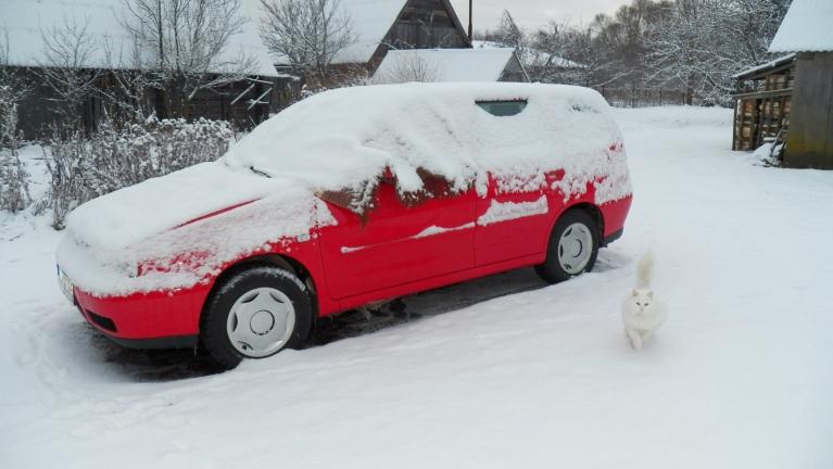 Snigšanas rezultāts 24. decembra rītā... 5 cm sniega, un viens var veiksmīgi maskēties...