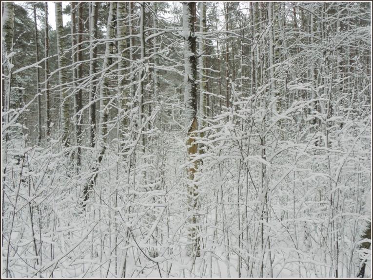 Autors: gubumākonis. Ziema Rīgā atgriežās 26.02.2012.