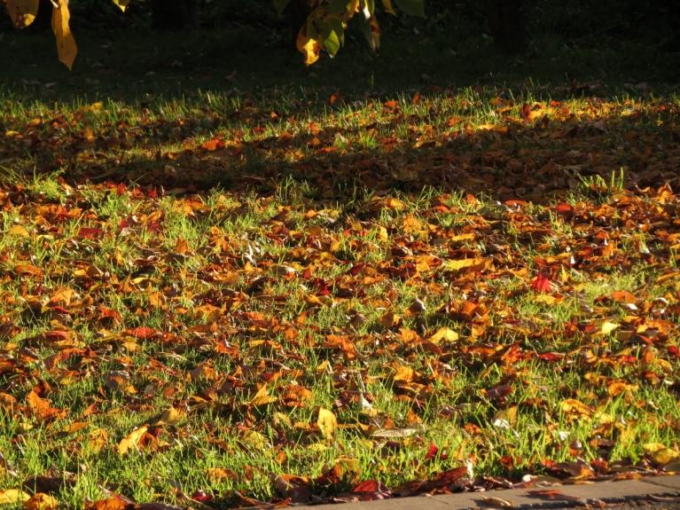 Sācies rudens lapkritis