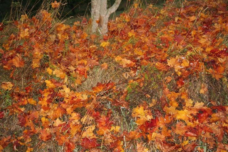 13.10.2012. Krāsainais paklājs.