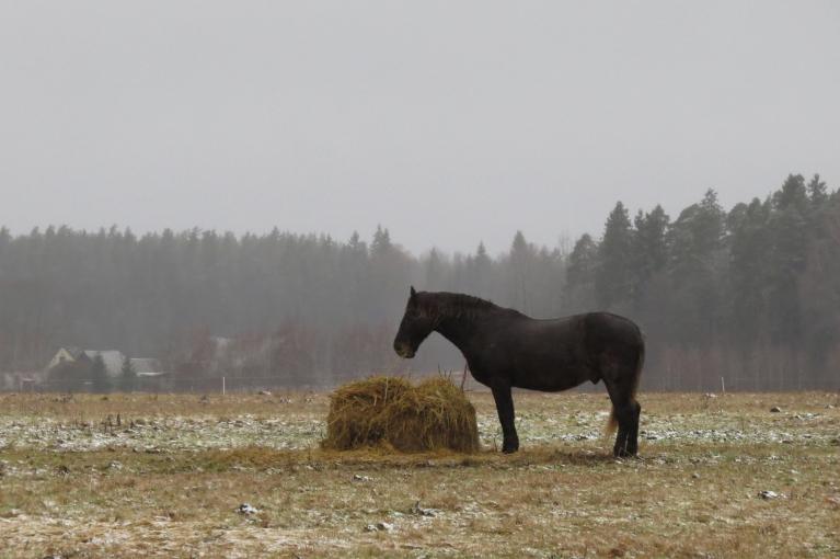"""""""Par ko visi tā streso?"""", prāto zirgs un turpina ieturēt maltīti..."""