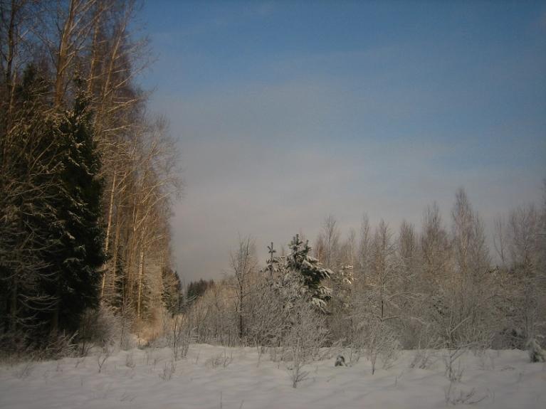Foto: Lauma. Sveču diena, 2.februāris, netālu no Rīgas