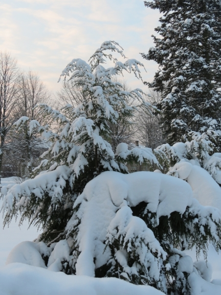 Autors: Ceļotājs. Ventspils, 20.12. Sniega segas biezums pēc LVĢMC datiem - 28 cm