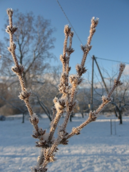 Autors: Viljams. 01.01.2012.