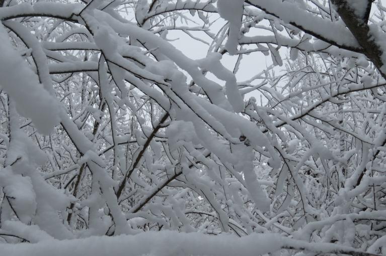 Mežā tā pa īstam var izbaudīt sniega baltumu.