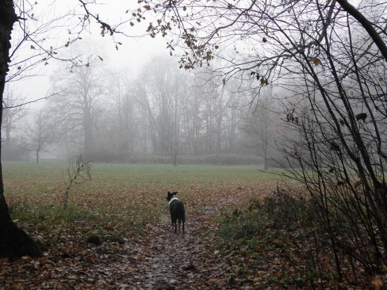 Arī novembris neierasti kluss un mierīgs, vētru joprojām nav...