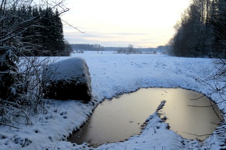 Mežmalā vēl lielas ūdens lāmas- sniegs uzsniga uz nesasalušas zemes.