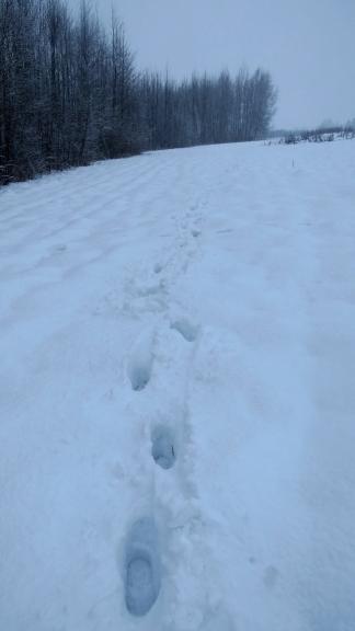 Dažās meža pļaviņās sniega biezums joprojām ap 30 cm (manu zābaku garums), pārnākot mājās kratu laukā sabirušo sniegu.