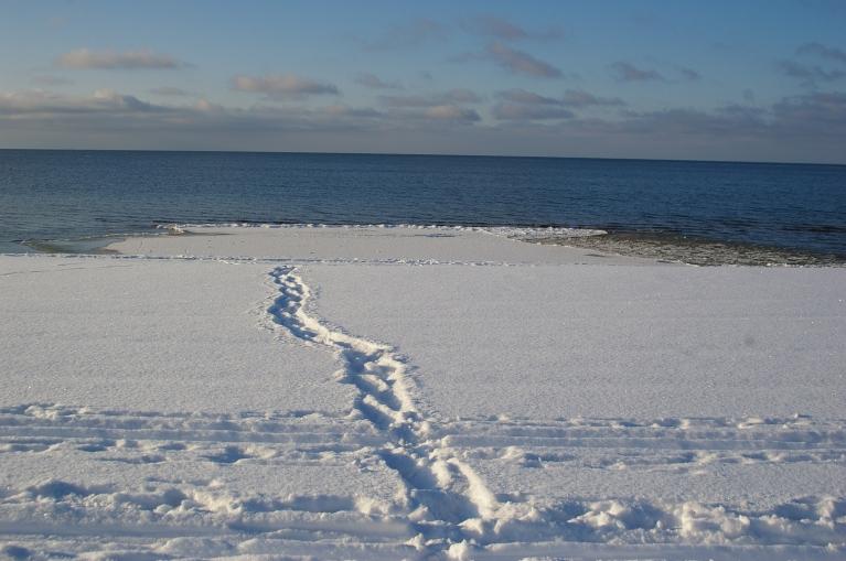 Autors: Mulkari. 21.janvārī pie Saulkrastiem līcis vēl vaļā līdz pat horizontam.