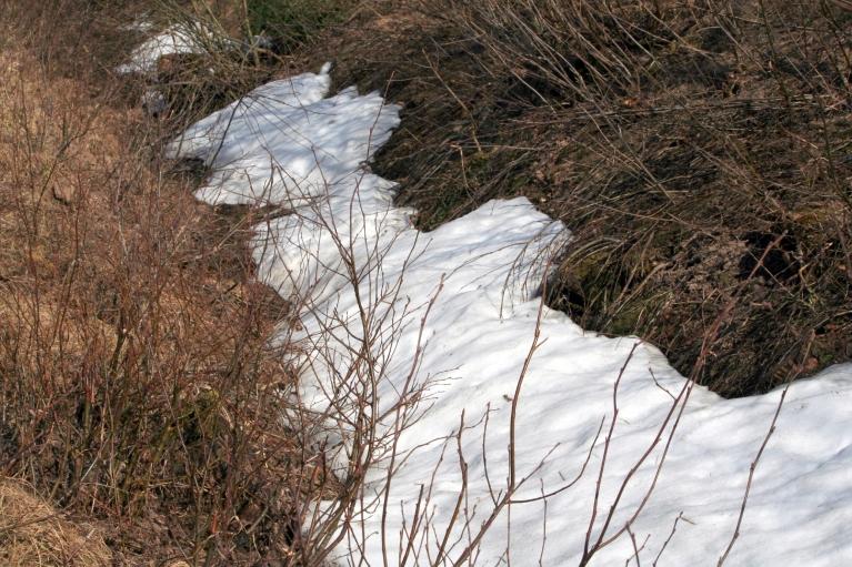 Grāvī vēl atradu pēdējo sniegu.