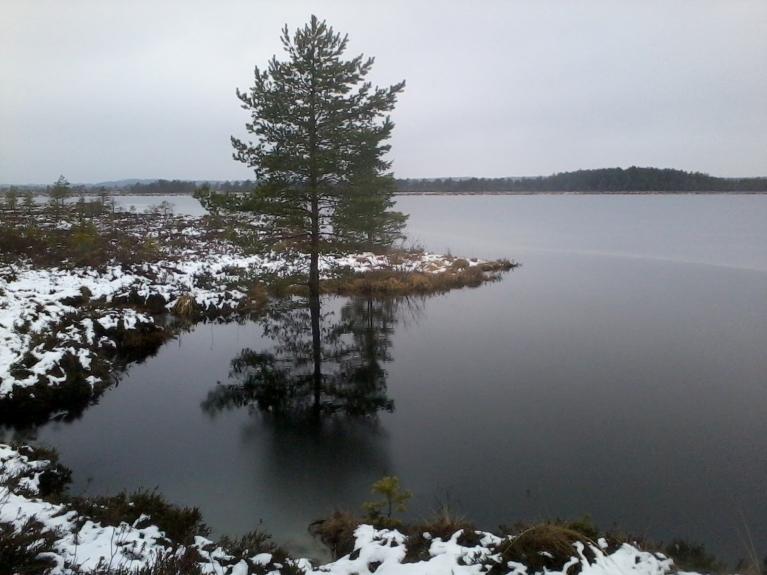 Ramatas Lielezers - lielākais purva ezers latvijā.