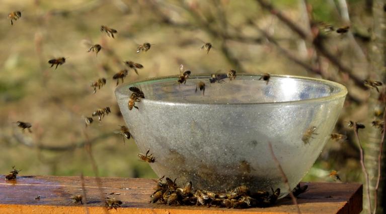 Foto: Migla. Kaimiņš savas bites dzirda ar kļavu sulām (13.03.)