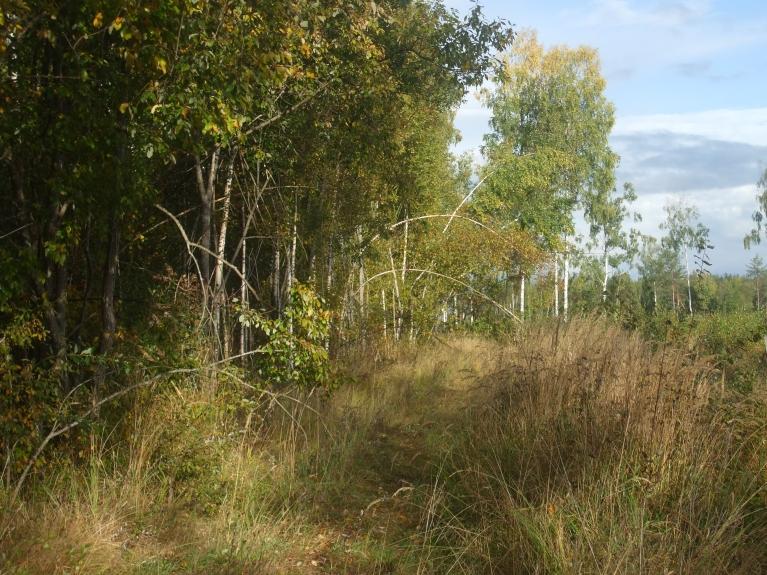 ...un meža skati pa ceļam uz mājām... :)