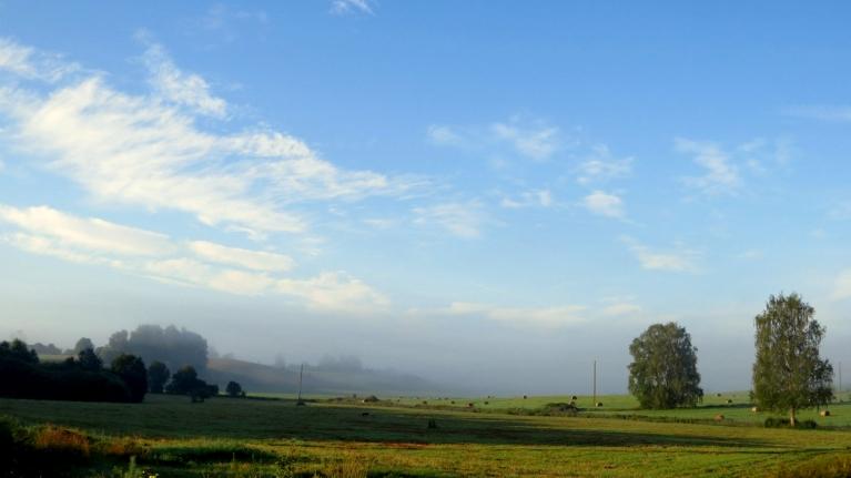No rīta - skaista migliņa.