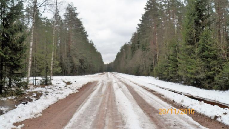 Žīguri - Katleši. Vietām mežā ir šādi skati. Ceļš pagrūti izbraucams.