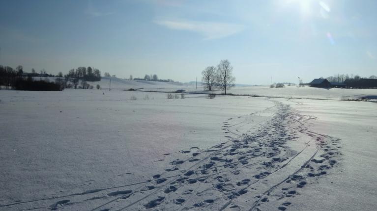 Pa sniegoto klajumu var droši staigāt, sērsna notur!