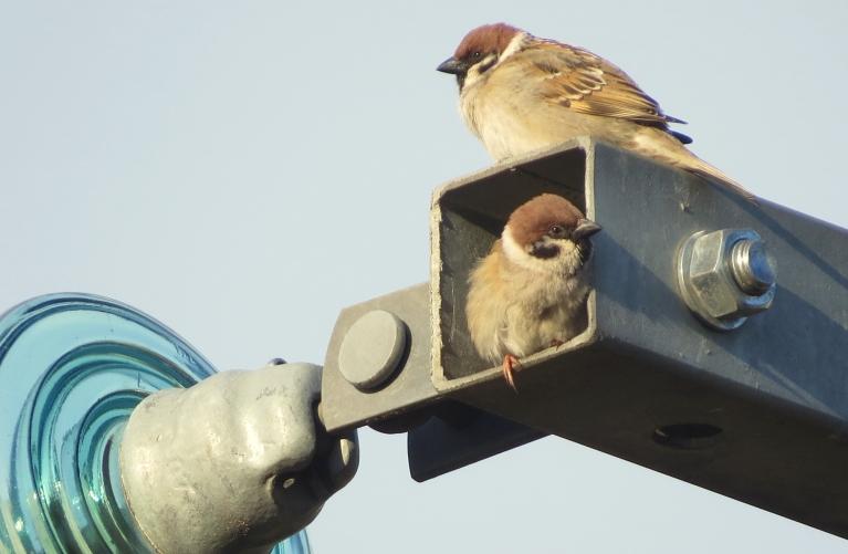 """Zvirbuļi izsaka pateicību A/S """"Sadales tīkliem"""", par  jauno tipveida dzīvojamo platību :)."""