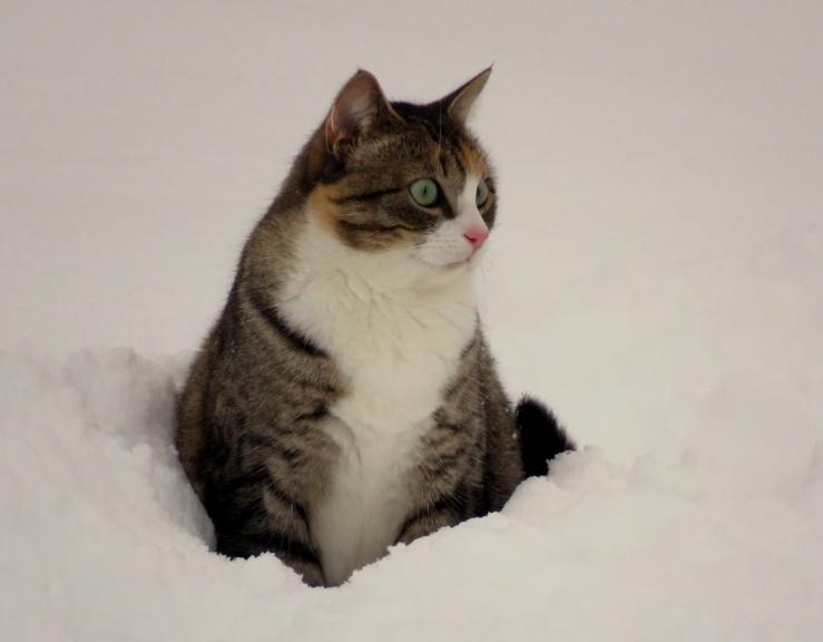 Mīce par sniegu neko īpaši nesaka, kažociņā silts, puncītis pilns.
