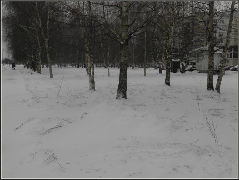 Autors: gubumākonis. Puteņo arī Rīgā (16.12.) Vēja lauztie zari