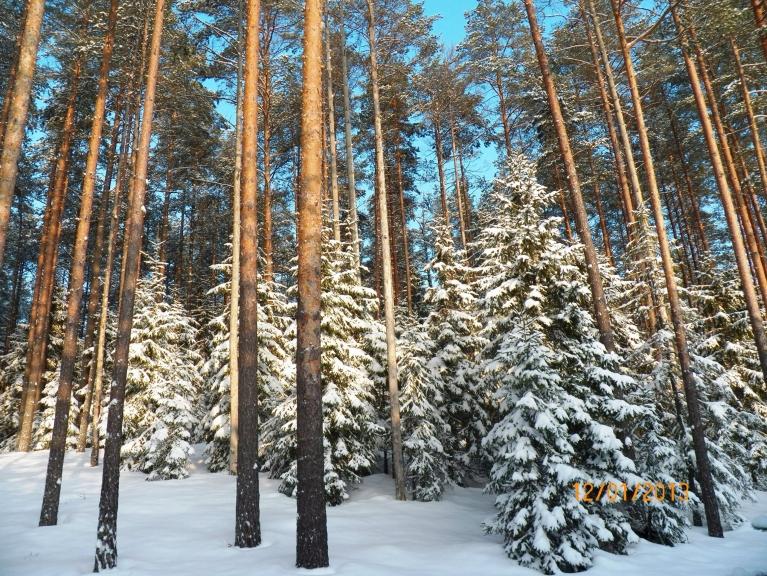 Žīguru apkārtnes meži