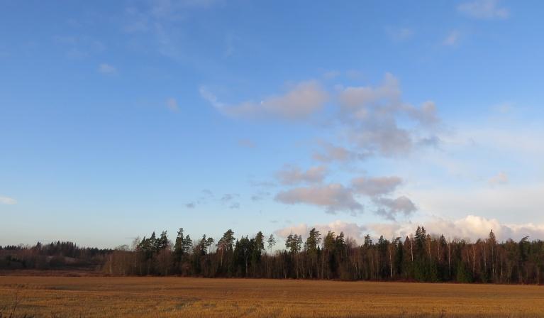 Pirmā decembra rīta puse, Allažos sniega nav nemaz.