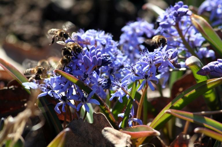 15.04.2012. Vecpiebalga. Bitītes darbā.