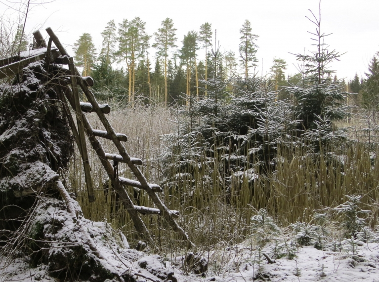 Pastaigai pa mežu tas nebūt netraucē.