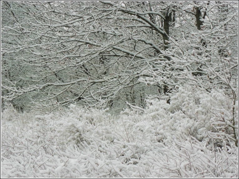 2010.gada 25.novembris