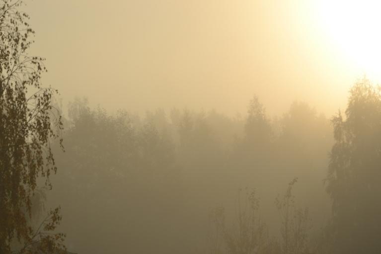 Bet nākamā rīta biezā, drēgnā un diezgan ilgi neizklīstošā migla liek tomēr šaubīties vai pavasaris atkal atgriezies...