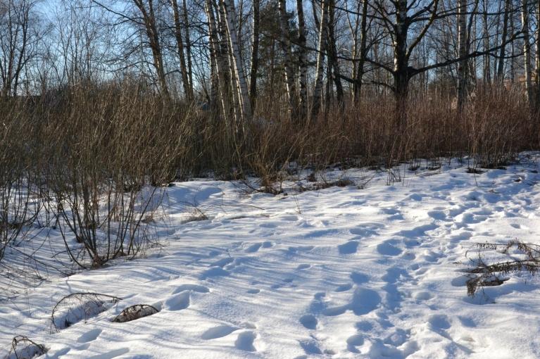 Netālu no dīķa, uz kuru ved grāvis, atrodu arī sniegotāku pļaviņu - tur sērsna ir tik bieza, ka manus 65 kilogramus neiztur tikai katrs trešais solis.
