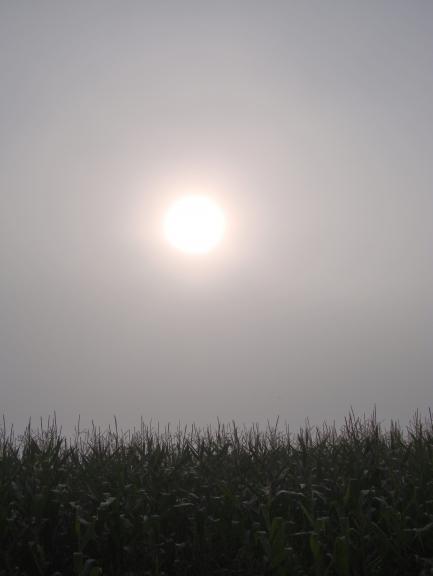 Saule nevar izspraukties cauri biezajai miglai.
