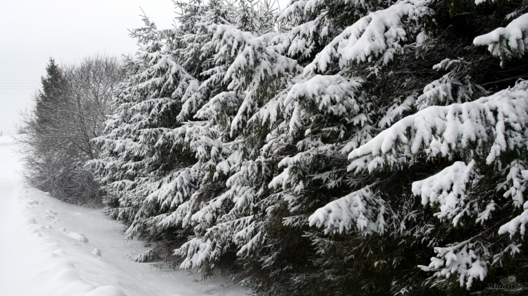 Foto: muntis. Vecpiebalga, 1.februāris