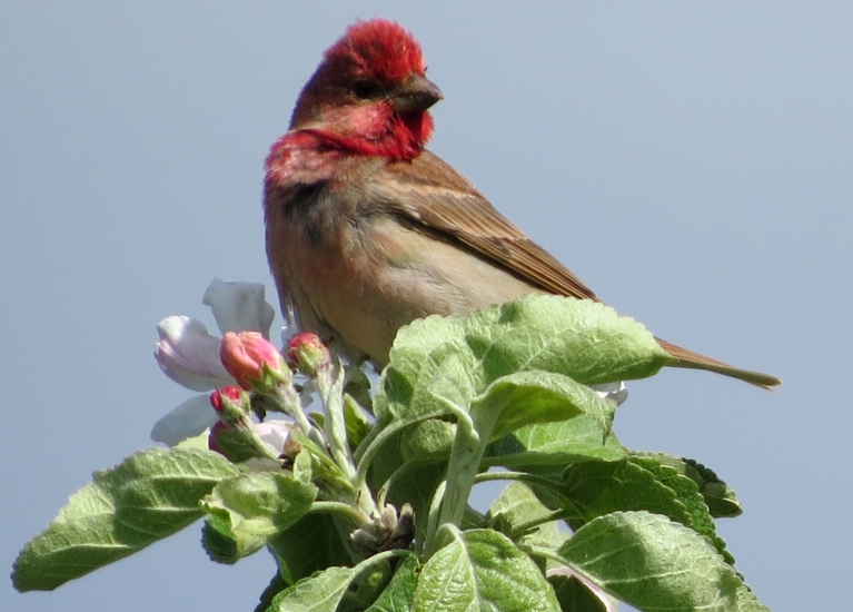 """Šogad manā dārzā dzīvo šis """"papagailītis"""", priecāšos, ja jūs viņu atpazīsiet!"""